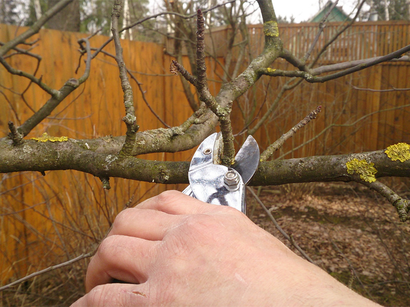 Как осенью обрезать плодовые деревьея