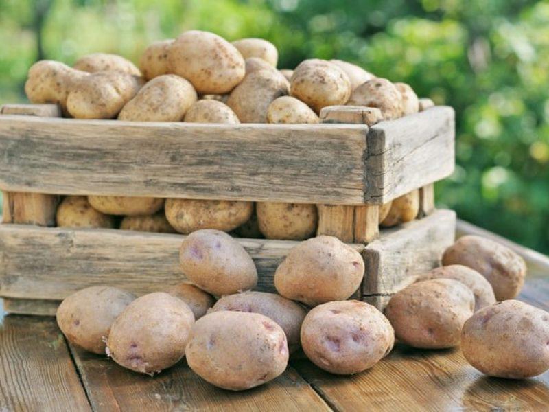 Как сохранить картофель на зиму