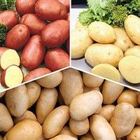 сорта картофиля