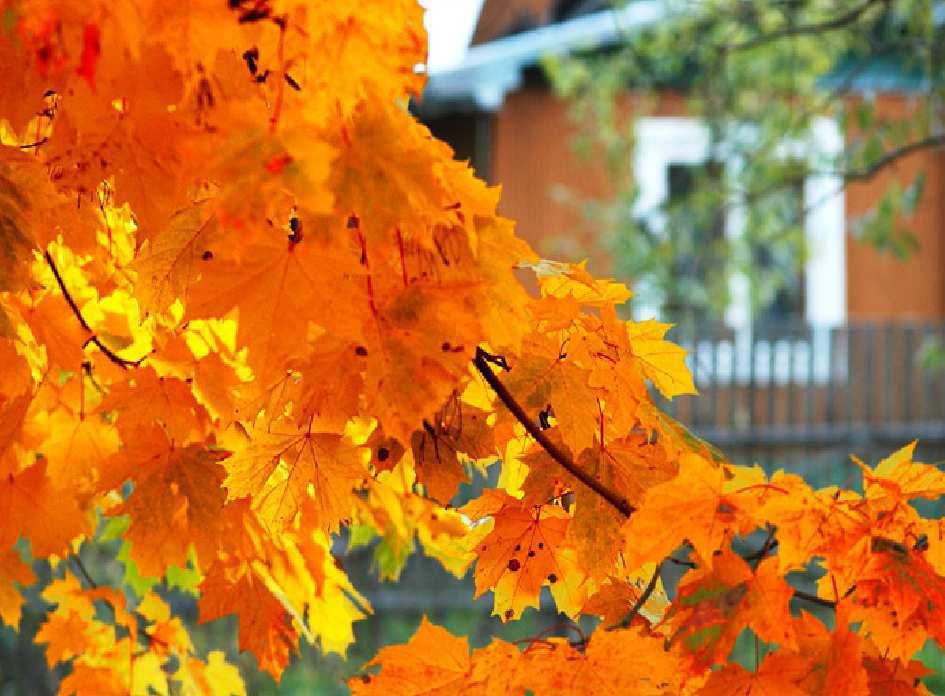 Что сажать осенью на даче