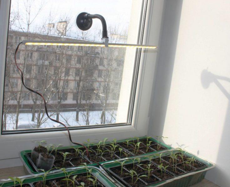 Дополнительное освещение зелени зимой