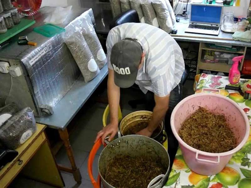 Подготовка спор белых грибов для домашнего выращивания