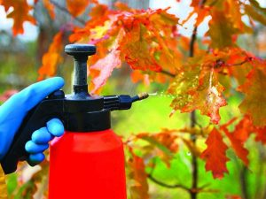 Защита и правильная эксплуатация при разбрызгивании мочевины на деревья
