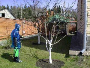 Как пользоваться мочевиной в саду для обработки деревьев в весеннее время года