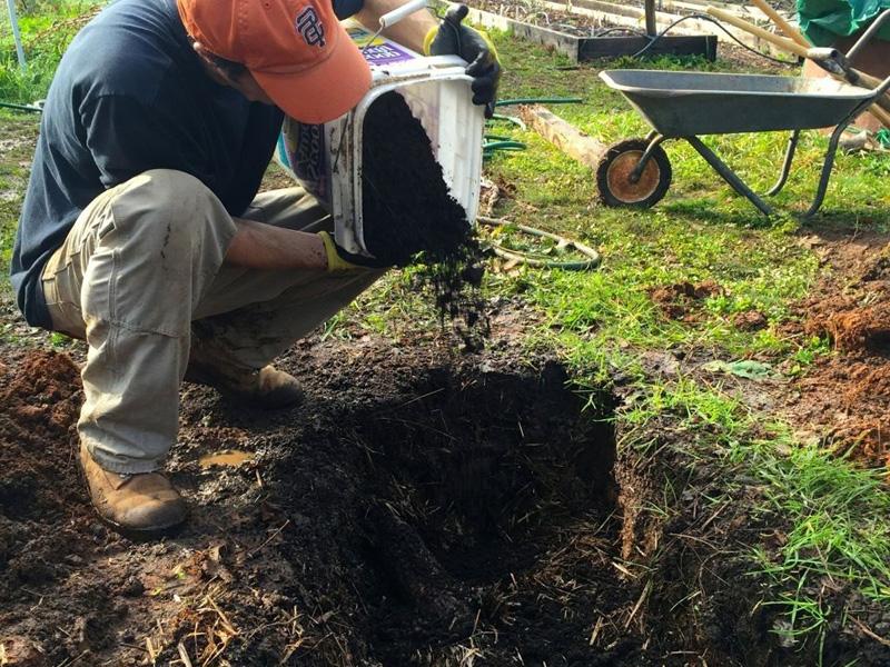 Посадка малины весной и выбор лучшего грунта