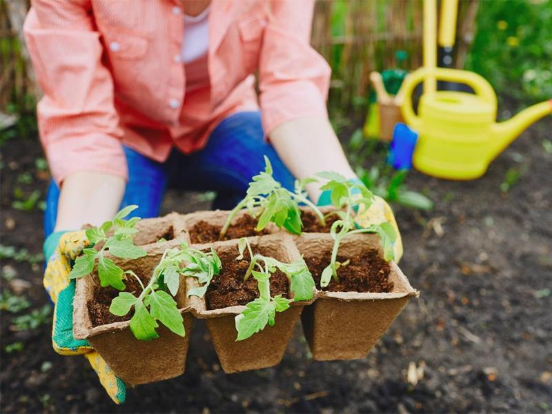 Чем лучше подкормить рассаду перед высадкой в открытый грунт