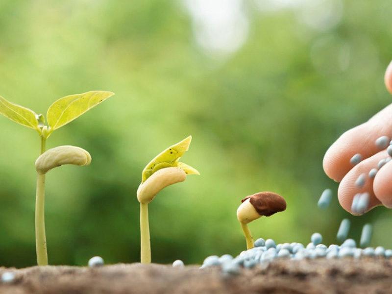 Чем лучше подкормить рассаду