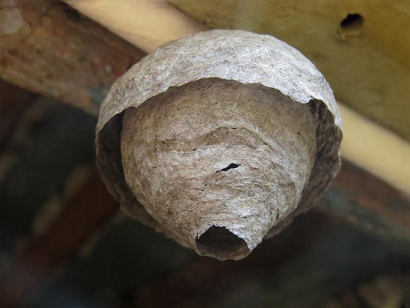 Как избавиться от ос на даче и как убрать гнезда из под крыши