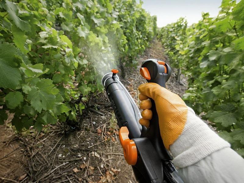 Болезни винограда и профилактическая обработка растений