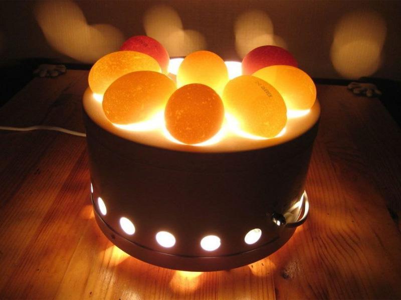 Овоскопирование гусиных яиц и какой овоскоп выбрать