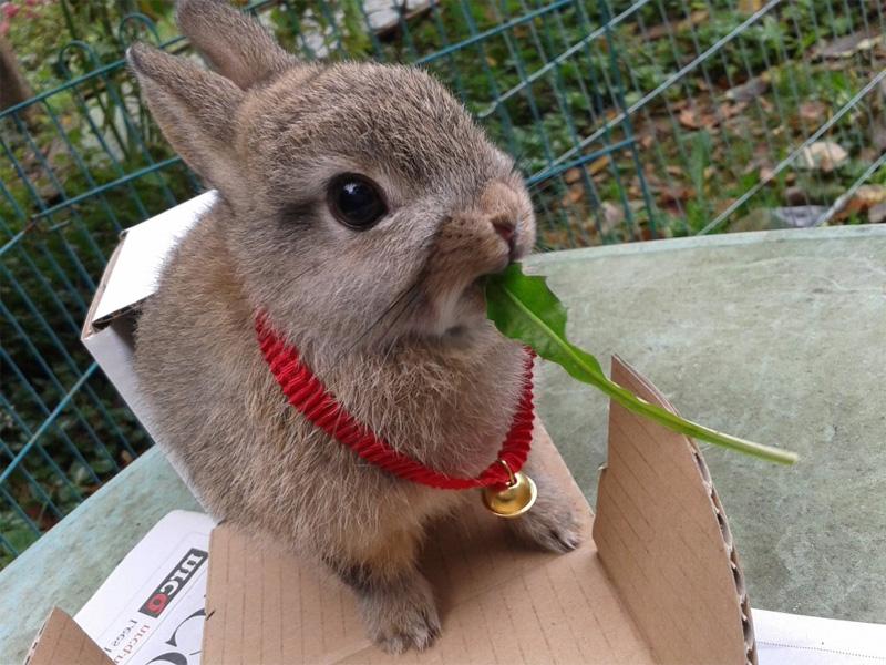 Породы кроликов декоративного типа