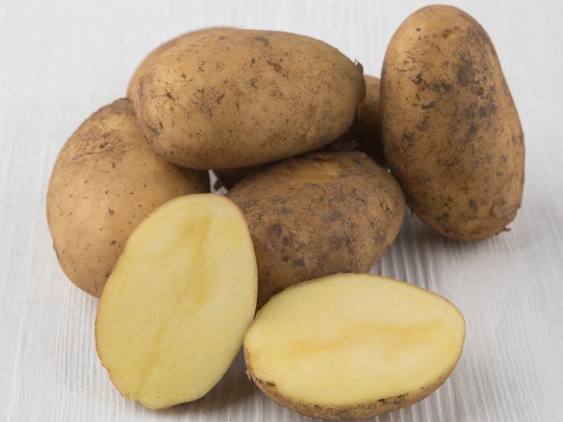 Хранение картофеля Гала