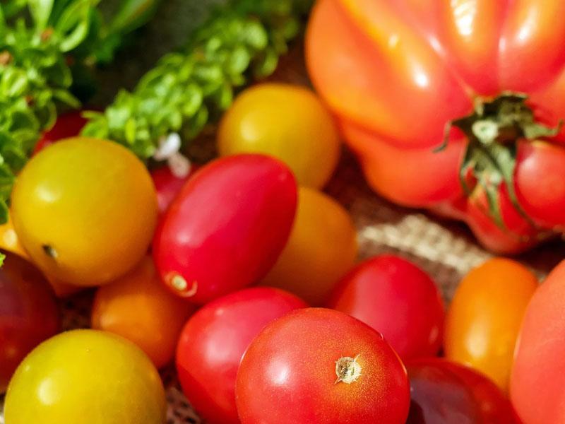 Какого цвета томаты выбрать