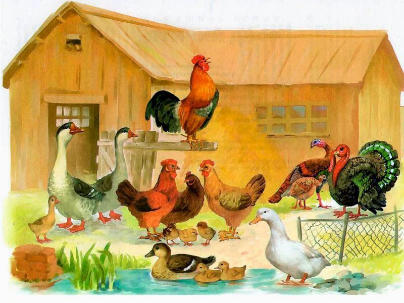 происхождение домашних птиц