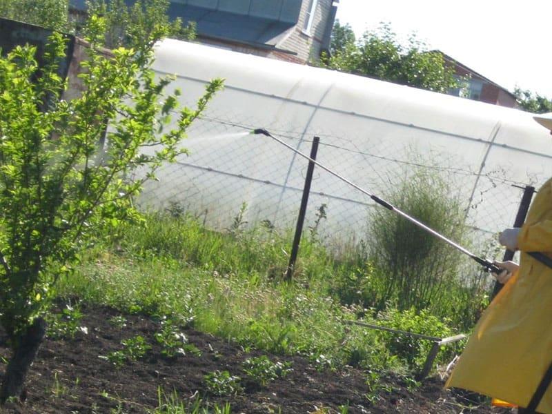 Интавир: инструкция по применению в саду