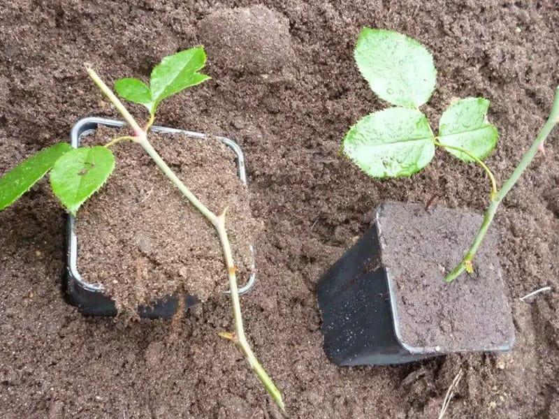 Как правильно высадить посадочный материал