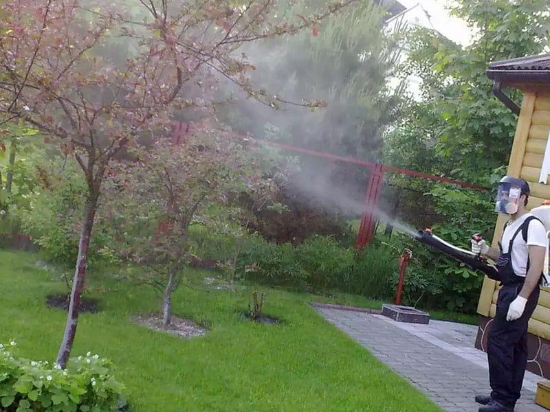 Правила обработки бордосской жидкостью осенью плодовых деревьев и кустов
