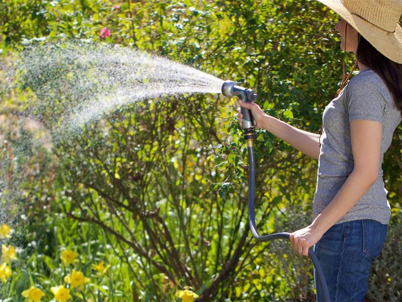 Герань садовая многолетняя уходи и полив цветов