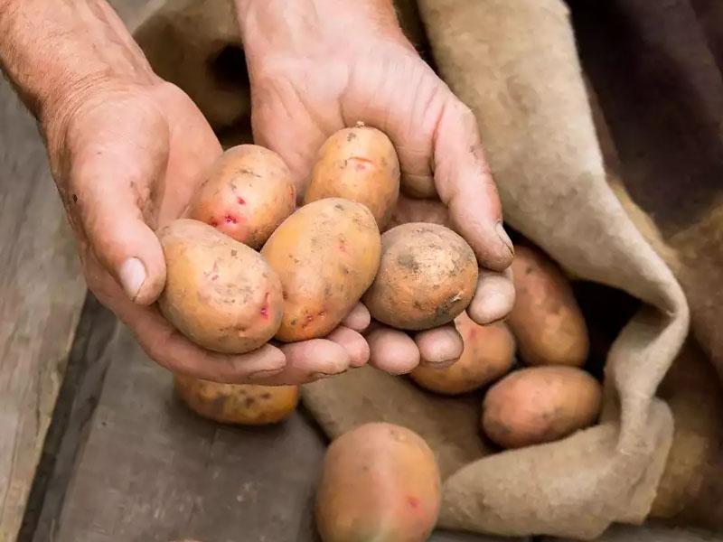 Как сохранить картофель