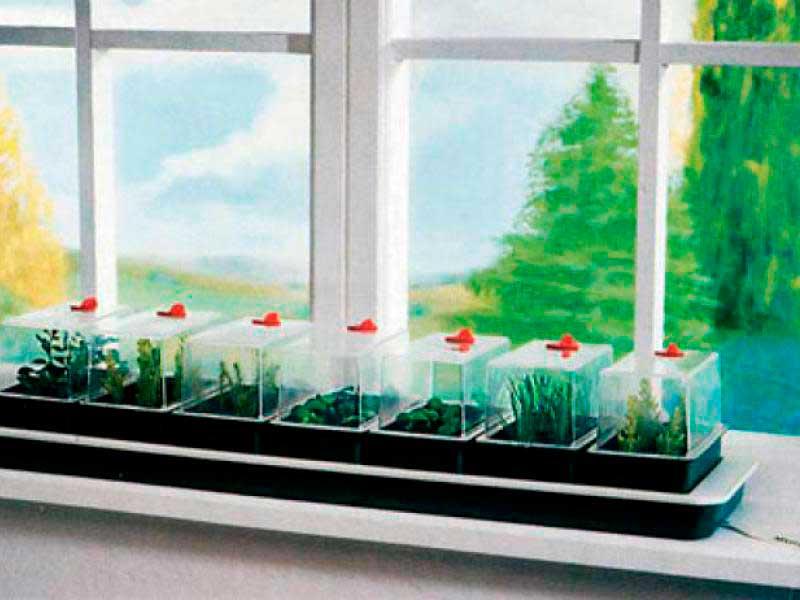 мини теплицы для выращивания зелени