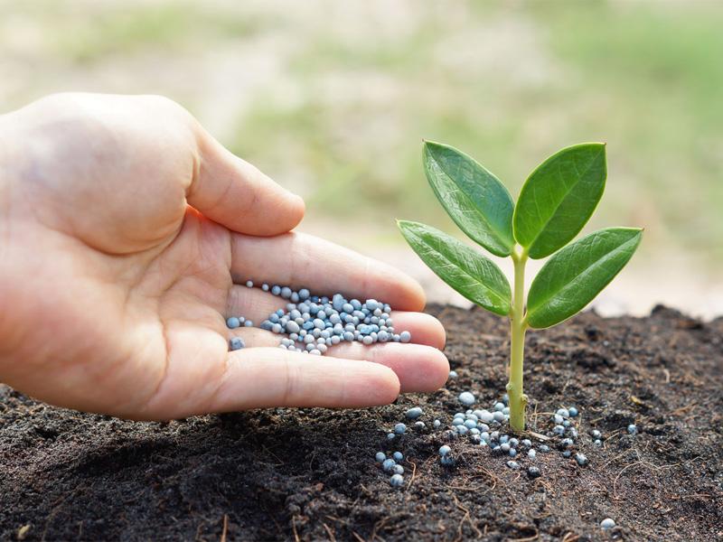 NPK удобрения, что это такое и зачем нужно растениям