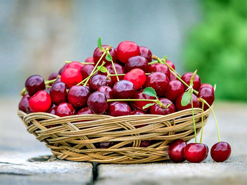 Обрезка вишни осенью для хорошего урожая на будущий год