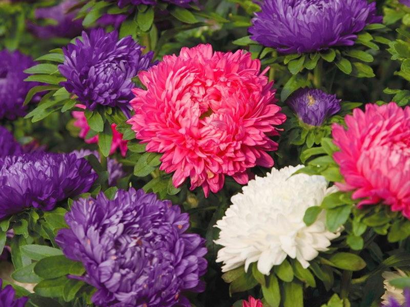Какие цветы можно посадить семенами под зиму: однолетние сорта