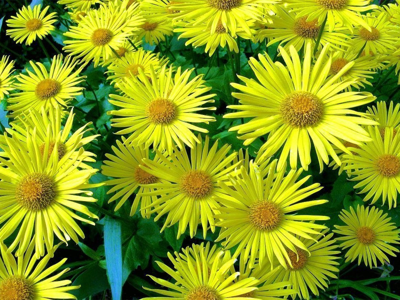 Какие цветы можно посадить семенами под зиму: многолетние сорта