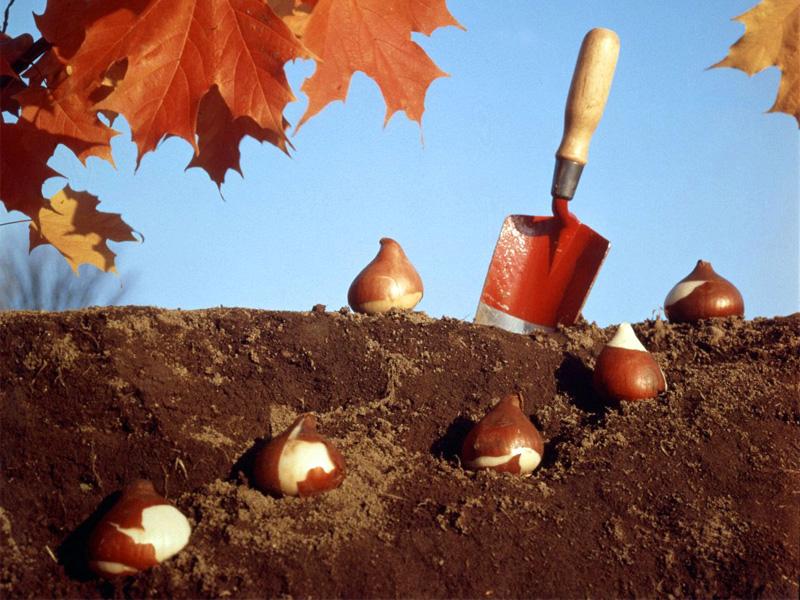 Какие цветы можно посадить семенами под зиму и технология посева
