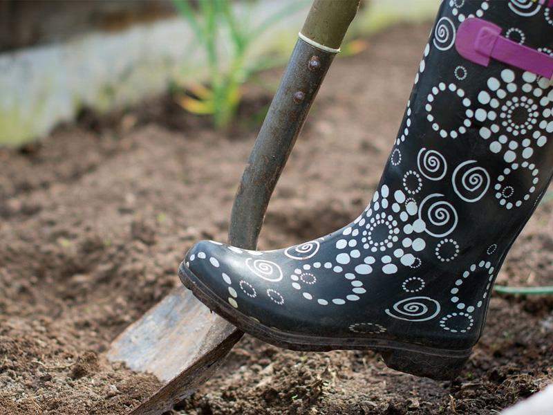 Какие цветы можно посадить семенами под зиму и подготовка почвы