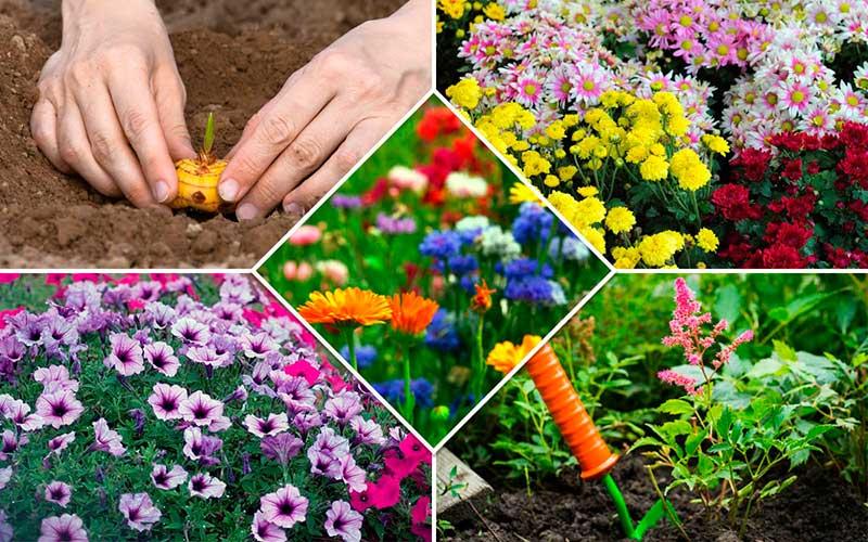 Какие цветы можно посадить семенами под зиму
