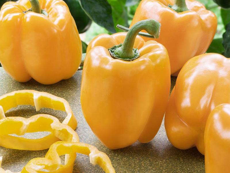 Лучшие сорта сладкого перца: описание сорта Асти