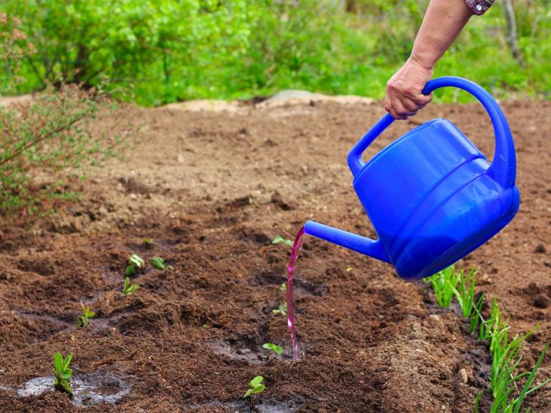 Mарганцовка как удобрение для растений в огороде