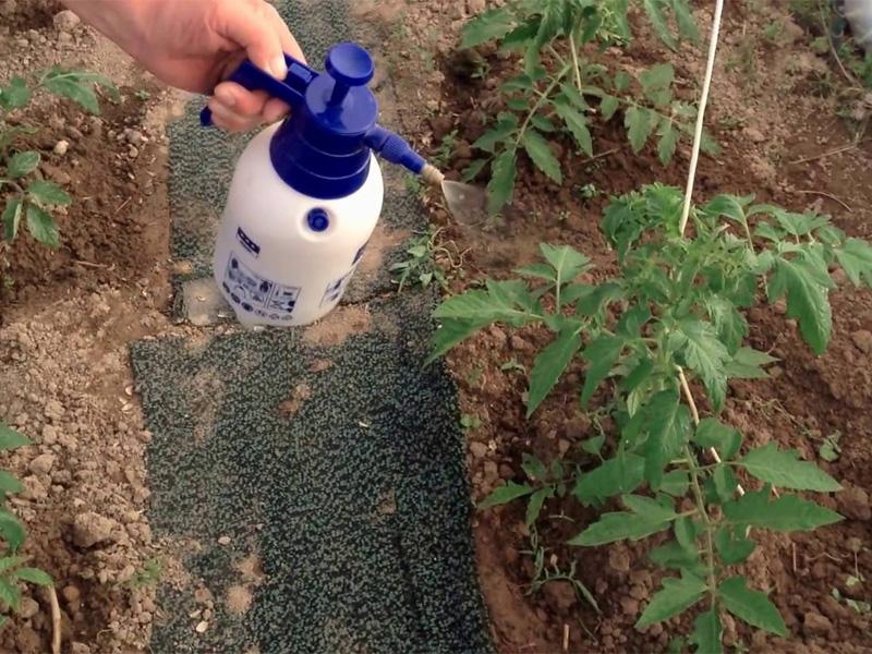 Mарганцовка как удобрение для хорошего урожая