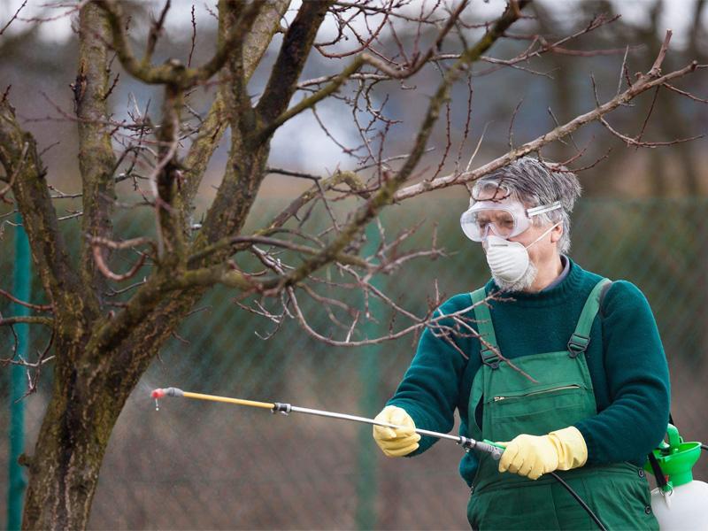 Медный купорос осенью и опрыскивание деревьев