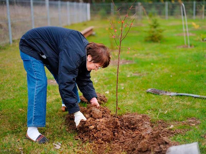 Сроки посадки деревьев и кустарников осенью