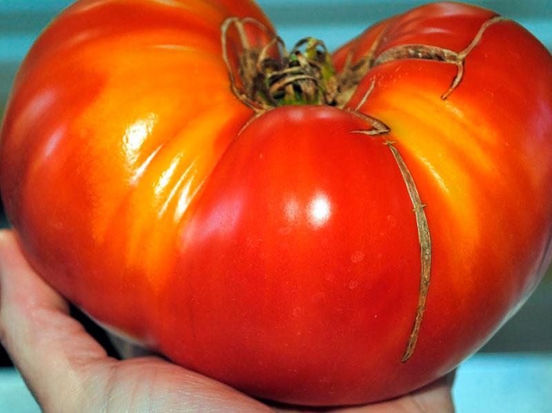 Сорт томатов Черный Крым