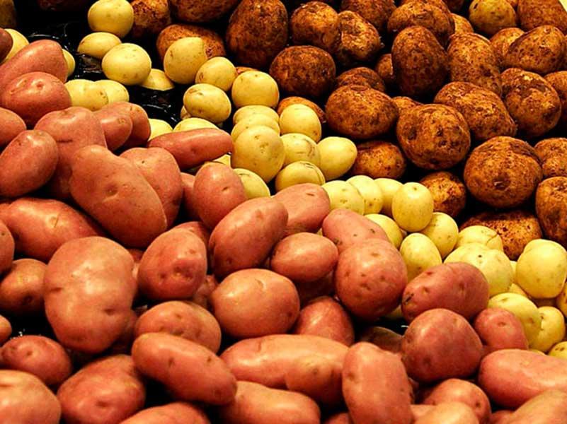 Сроки созревания картофеля по сортам