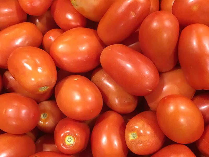 Томат Рома: описание идеального для консервации сорта для сохранения вкуса