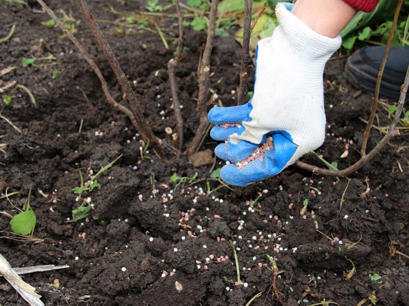 Удобрение «Растворин»: способы применения для подкормки плодовых
