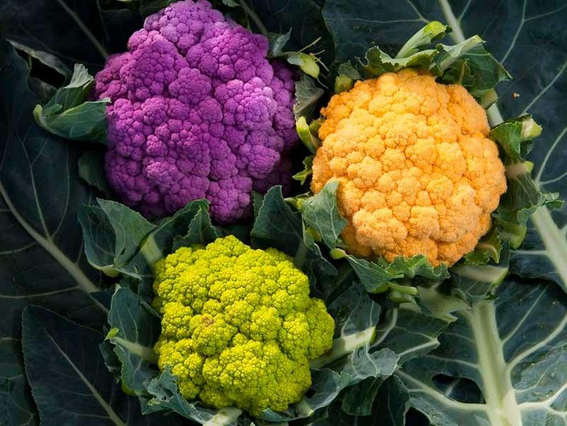 Cорта цветной капусты