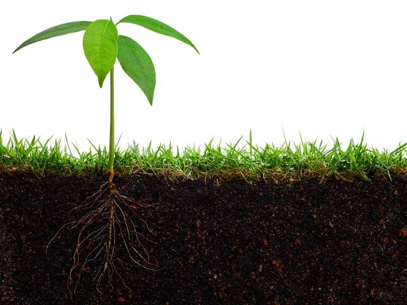 элементами для роста