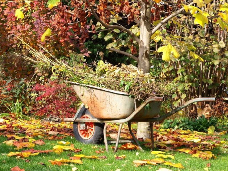 Лунный календарь садовода 2019 и работы в октябре