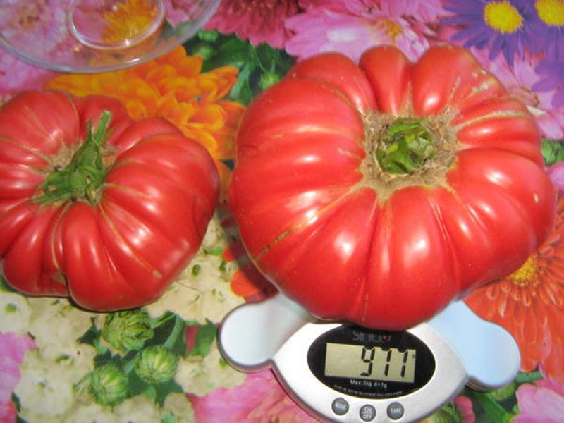 Томат Японский краб: описание сорта томата с весом плодов до килограмма