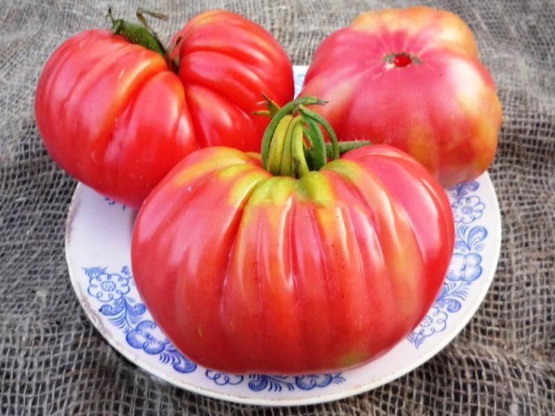 Томат Японский краб: описание сорта и правила выращивания томатов самостоятельно