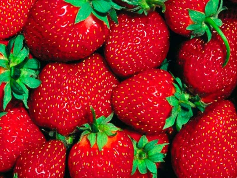 Клубника – самая любимая ягода