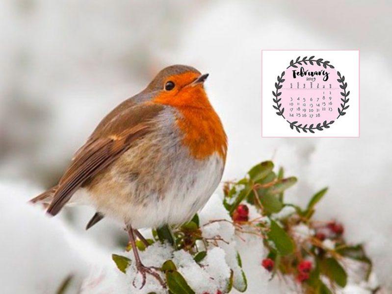 Лунный календарь садовода на февраль 2019