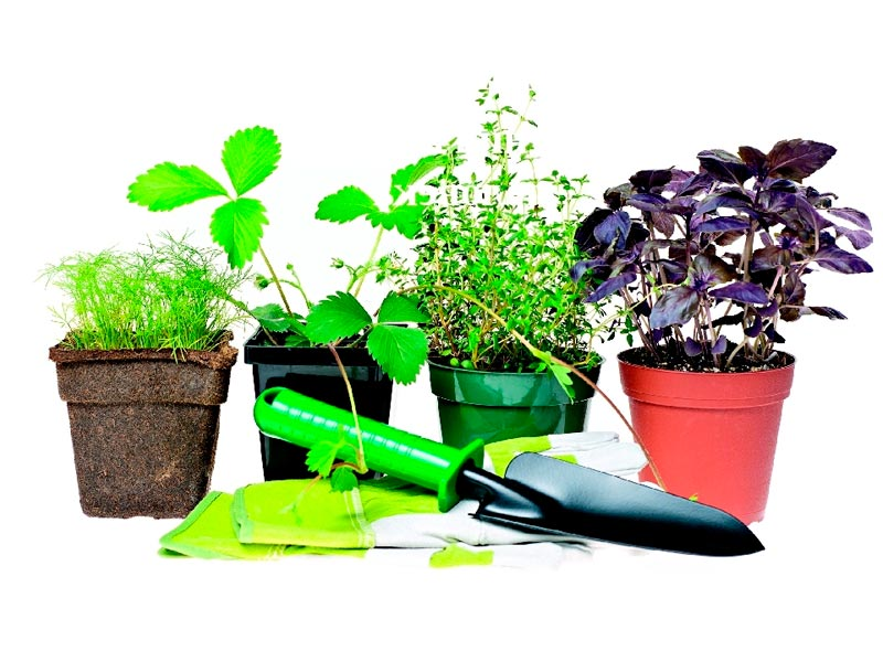 Пересадка комнатных растений в марте