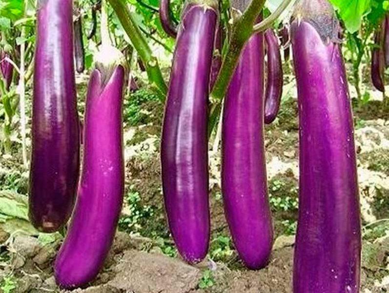 Длинный фиолетовый