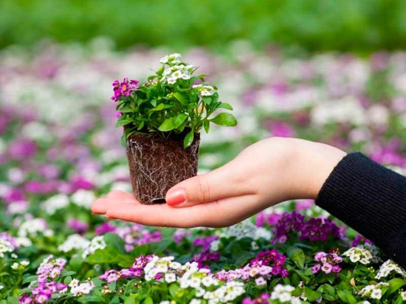 Какие цветы сажать на рассаду